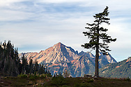 A lone fir tree stands in front of Mount Larrabee in the North Cascades of Washington State, USA. Photographed from the Fire and Ice Trail in the Heather Meadows area of the Mount Baker-Snoqualmie National Forest.