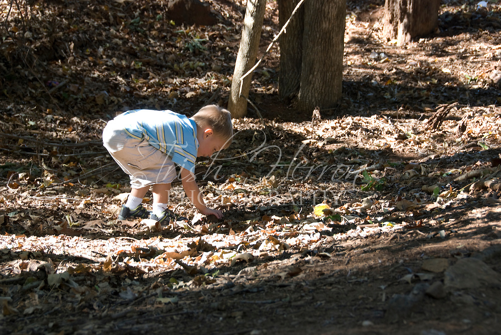 A young boy tries to pick up a rock while playing outdoors in the fall among fallen oak leaves.