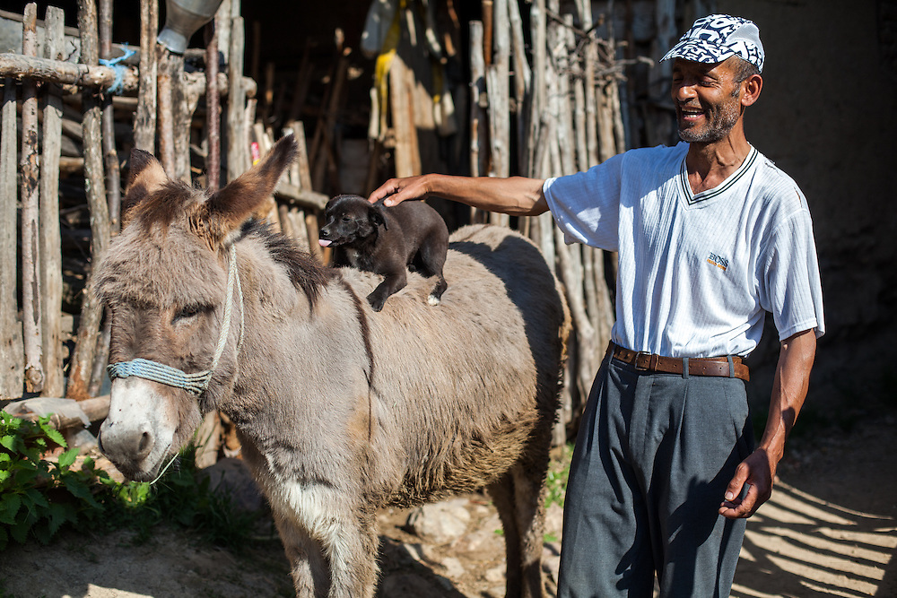 Portrait of a man with his donkey and a puppy at the Roma part in the city of Crnik.