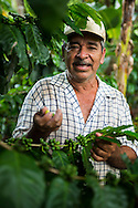 Matagalpa, Nicaragua, May 2014. Alfredo Rayo, a 60 year old coffee farmer, inspects his coffee beans. We overnight at a homestay in La Corona village. The people own, or work in, small familiy coffee plantations that sell their Arabica coffee via Sol Cafe, a Fair Trade cooperative. Matagalpa tours offers trips to coffee plantations and remote villages, rural community tourism, agro-tourism, hiking and biking. Central America's largest and least populated country consists of lakes; volcanoes and Spanish colonial cities. Photo by Frits Meyst / MeystPhoto.com