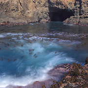 Sea Cave And Kelp Cove - Russian Gulch - Mendocino, CA