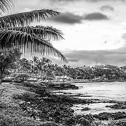 Maui Hawaii sunrise black and white panorama photo with a plam tree along Wailea Beach Path at Wailea Beach. Copyright ⓒ 2019 Paul Velgos with All Rights Reserved.