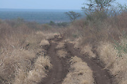 Dirt track winding thourgh the Mago National Park, Omovalley, Ethiopia,Africa