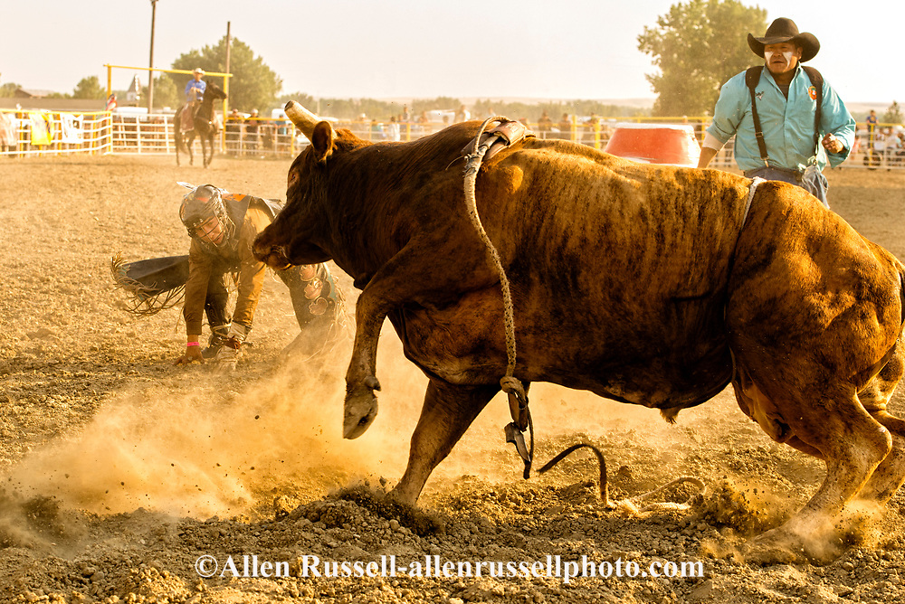 Crow Fair, Indian rodeo, Bull Rider, Bull Fighter, Crow Indian Reservation, Montana