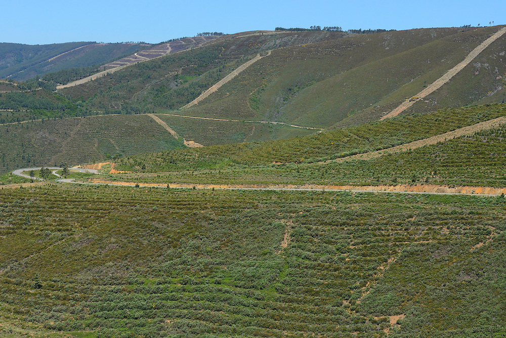 So called Forestry taking place in the Sierra de Gata mountain range, Western Iberia. Tree planting in straight lines, ploughing of the ground, and very ugly fire breaks/fire lanes, Spain