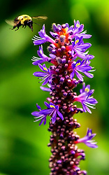 I am not sure what kind of flower this is.  This photograph was shot at the Saint Louis Zoo.