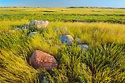 Prairie grasslands at sunrise (West Block)<br /> Grasslands National Park<br /> Saskatchewan<br /> Canada
