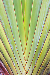 detail of a tropical plant in Florida