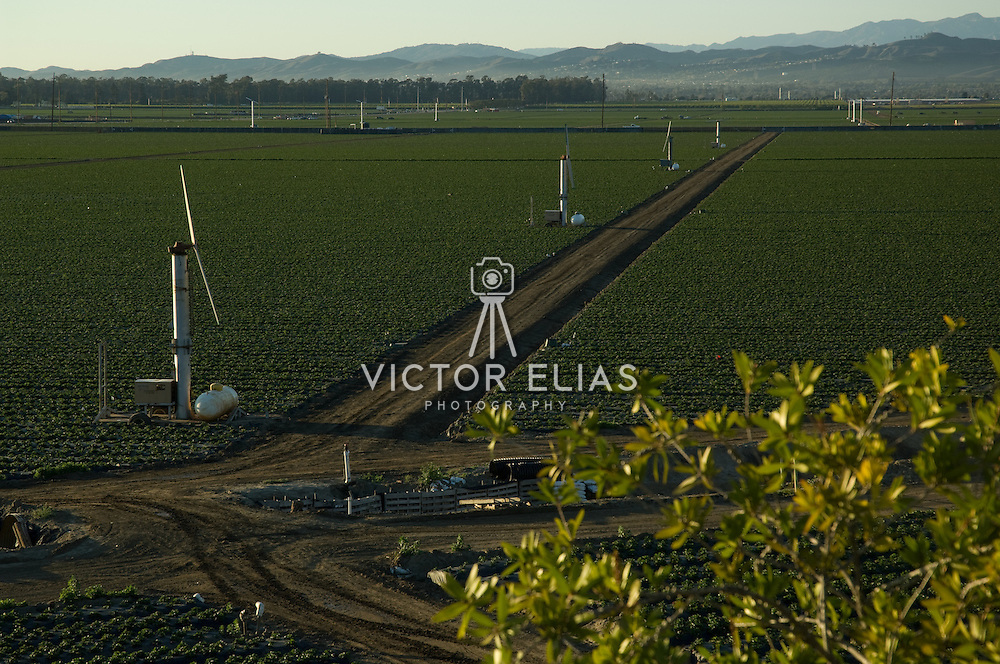 Agriculture lands near Camarillo, California. USA.