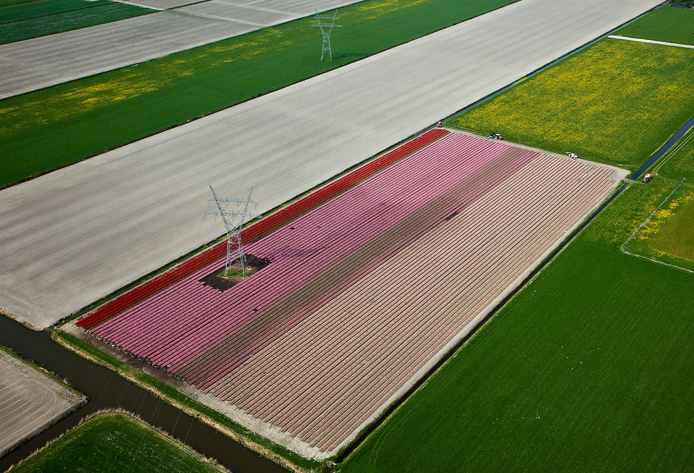 Nederland, Noord-Holland, Schermer, 28-04-2010; Polder De Schermer met hoogspanningsmast omringd door bloembollenveldenen weilanden: lente in Holland..Electricity pylon in the Schermer polder surrounded by bulb fields and green pastures: Spring in Holland.luchtfoto (toeslag), aerial photo (additional fee required).foto/photo Siebe Swart