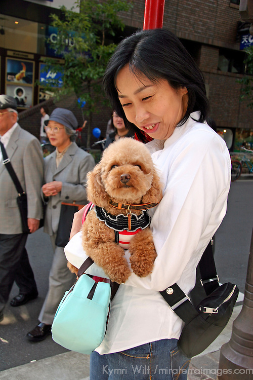 Asia, Japan, Tokyo. Young woman proudly holds her well-groomed and dressed poodle as a fashion accessory in the Ginza.