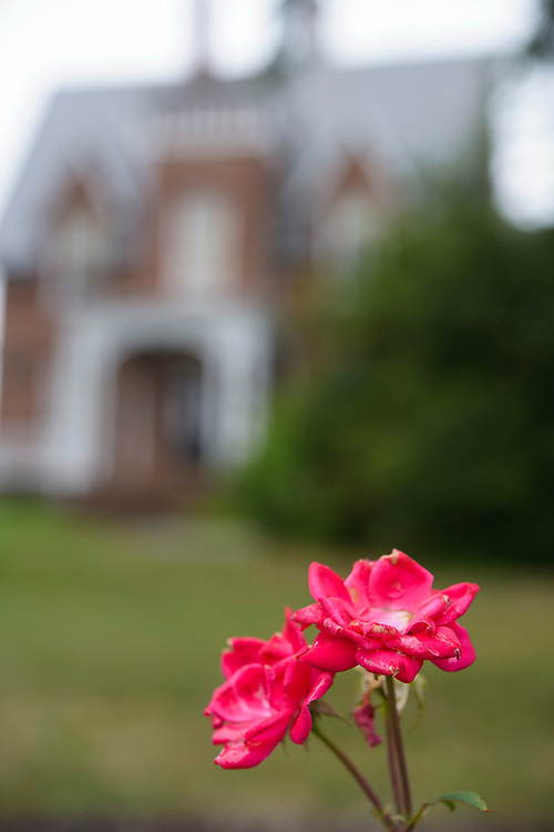 (photo by Matt Roth).Friday, July 20, 2012..The rose garden at McDaniel College Friday, July 20, 2012.