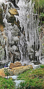Spain, The Pyrenees Mountains ice droplets on a tree