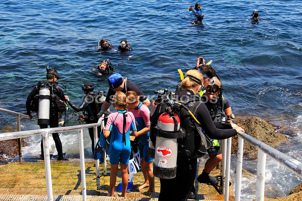 Scuba Diving at Casino Point Dive Park Catalina Island