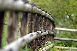 Eifel Gold Ranch - Monteneau 2003<br />Photo © Dirk Caremans