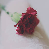 close up shot of a carnation flower over a girl's leg