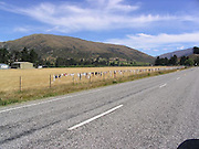 The Bra Fence <br /> <br /> The Cardrona Bra Fence of Central Otago, New Zealand, began in 1999 some time between Christmas and New Year, when four women's bras were found attached to the wire fence alongside the road. It's not known who did it and why, but rumor is that a group of women were celebrating the new year at the Cardrona Hotel, and after leaving the pub late at night, they decided to take off their bras and hang them on the fence. The sight of female lingerie fluttering in the wind inspired more women to leave their undergarments, and by the end of February 2000, the original four were joined by sixty more. As news about the fence spread, even more bras started appearing. In the following years the bra population multiplied to thousands and the fence became a unique tourist attraction gaining worldwide attention. Unfortunately, not everyone was pleased. Some viewed the fence as an eyesore and embarrassment and also as a potential hazard to drivers using the road. Over the years, the fence was stripped off the bras on numerous occasions. But the bras returned each time. The first attempt at clearing was made just two months after the first bras were attached. Another attempt was made in October 2000 when a few unknown persons removed some 200 bras from the fence. In 2006, even the Queenstown Lakes District council stepped in and removed 1,500 bras from the fence. But the fence started rebuilding its collection again. Later that year, an attempt to make the world's longest bra chain was made. The world record fell woefully short by more than 100,000 bras but managed to raised over $10,000 for charity.<br /> The Cardrona Bra Fence continues to be attacked periodically, and depending on when you visit, you might or you might not see the undergarments. But rest assured, the bras will return.<br /> ©Exclusivepix media