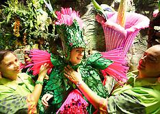 FEB 12 2013 Rio Carnival