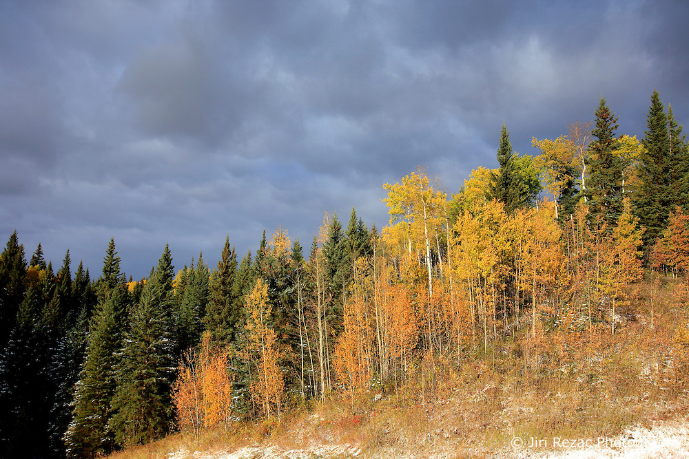 CANADA ALBERTA PEACE RIVER 9OCT09 - Autumn colours in the Boreal forest near Slave Lake in northern Alberta, Canada...Significant deposits of Bitumen, also known as tarsands have been found in the area around Peace River and Slave Lake, thus threatening the continued existence of flora and fauna of the Boreal through oil and gas developments...The Canadian boreal region represents a tract of land over 1,000 kilometres wide separating the tundra in the north and temperate rain forest and deciduous woodlands that predominate in the most southerly and westerly parts of Canada. ..The boreal region contains about 14% of Canada's population. With its sheer vastness and integrity, the boreal makes an important contribution to the rural and aboriginal economies of Canada, primarily through resource industries, recreation, hunting, fishing and eco-tourism...Photo by Jiri Rezac / GREENPEACE