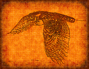 Graphic abstract rendering of Great Horned Owl named Dumbledore at the Carolina Raptor Center in Charlotte, North Carolina