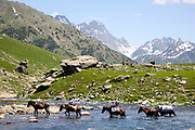 Trek to Harmukh mountain and Lake Gangabal, Kashmir Valley, Northern India 2009-07-12.<br />
