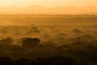 Sunrise over Sand Forest, Phinda Private Game Reserve, KwaZulu Natal, South Africa