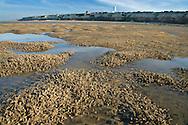 Tube Worms Hunstanton Norfolk UK November