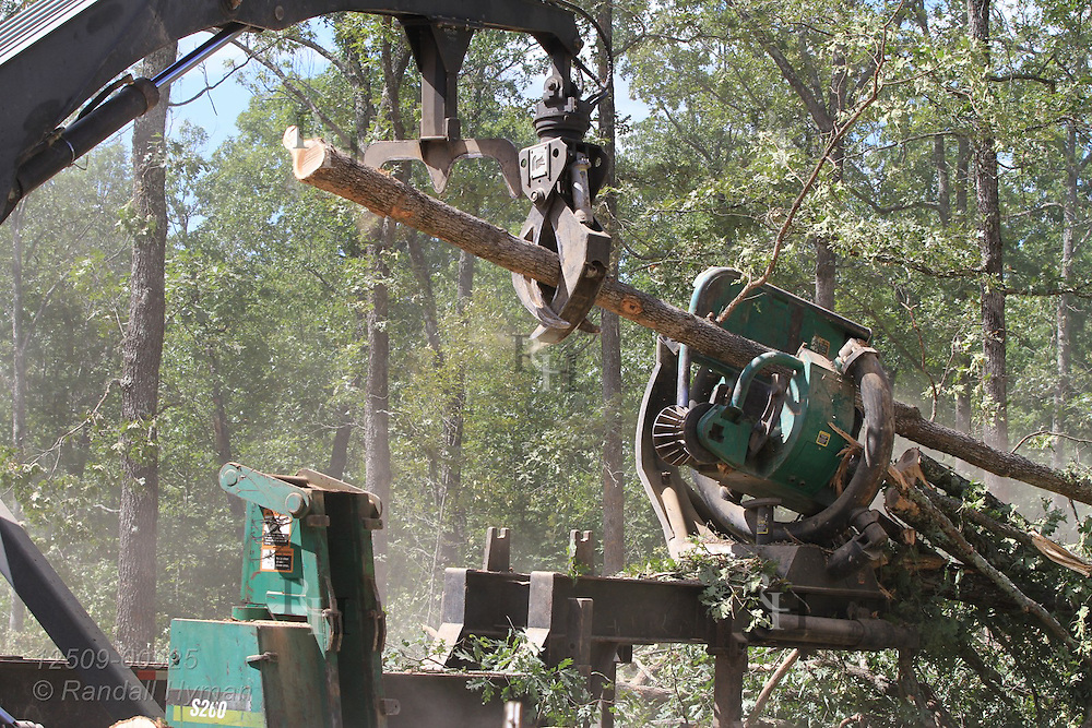 Machine strips branches off tree during ultra-mechanized clearcutting of an Ozarks woodland at Missouri In Woods Logging Demo near Viburnum, Missouri.