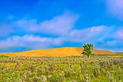 Great Sandhills and cottonwood tree<br />Great Sandhills<br />Saskatchewan<br />Canada