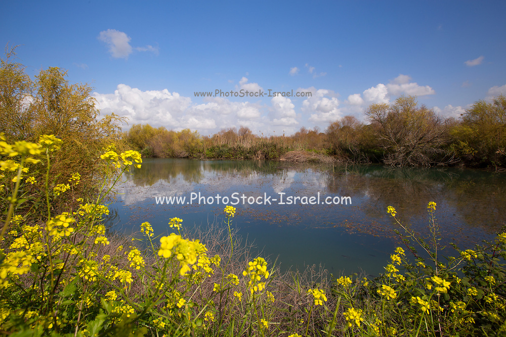 Israel, Northern District Ein Afek Nature Reserve on the Naaman River