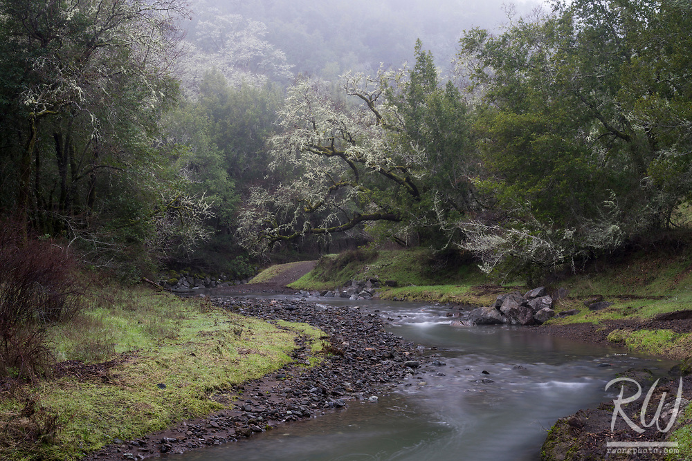 San Anselmo Creek / Cascade Canyon Open Space Preserve, Fairfax, California