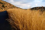 Grece, Peloponese, Trachila, Magne