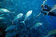 Sipadan Island, Malaysia, Top 10 Dive Sites Worldwide