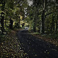 A single track road winding through trees during autumn fall in Suffolk England