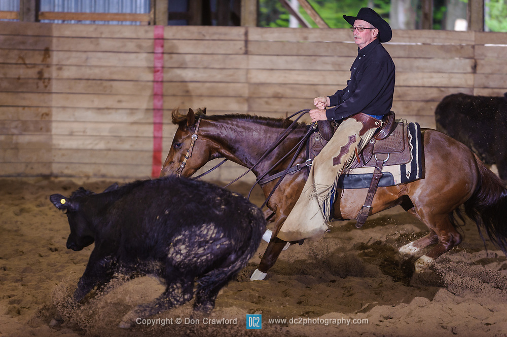 May 21, 2017 - Minshall Farm Cutting 4, held at Minshall Farms, Hillsburgh Ontario. The event was put on by the Ontario Cutting Horse Association. Riding in the 5,000 Novice Horse Class is Greg Wilde on Better Moonshine owned by the rider.