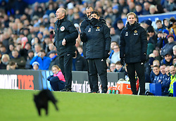 Wolverhampton Wanderers manager Nuno Espirito Santo and coaching staff look at a cat on the pitch during the Premier League match at Goodison Park, Liverpool.