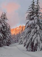 Evening alpenglow along the Rainier Vista Trail, Mount Tahoma Trails cross country ski trail system, Ashford, Washington, USA