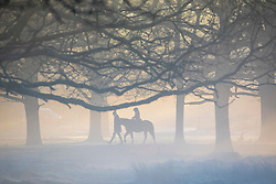 © Licensed to London News Pictures. 18/01/2020. London, UK. A rider enjoys the sun rise through the mist and trees in Richmond Pk this morning as families enjoy a wonderful frosty morning in the park. Forecasters predict a cold week ahead as Richmond Park issued a warning for ice after the previous day's high rain fall which could lead to increased slippery conditions for walkers and road users. Photo credit: Alex Lentati/LNP