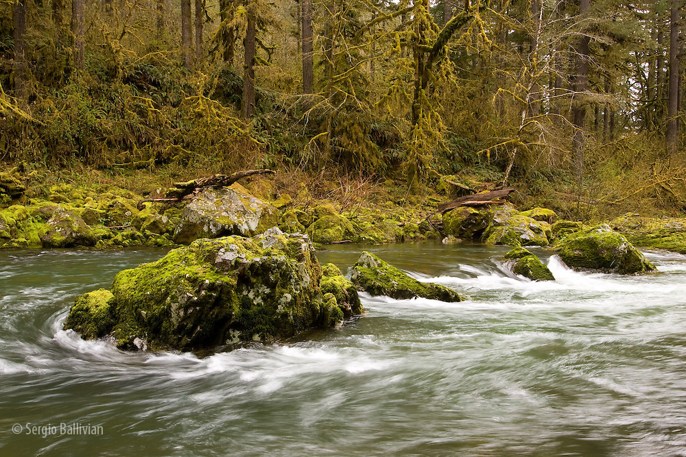 The Santiam River of Oregon in the Spring