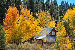 """Autumn Aspens 6"" - Photograph of yellow colored aspens at an old home in Truckee, California."