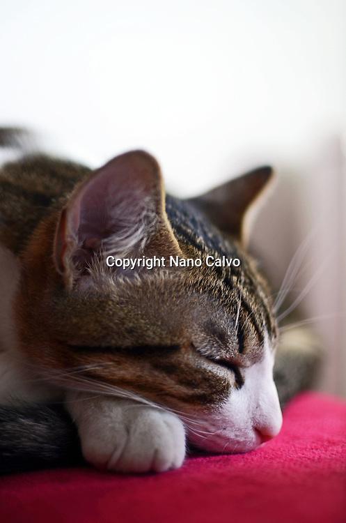 Cute kitten lies on sofa