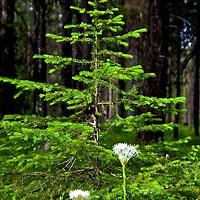 Wild flowers'13