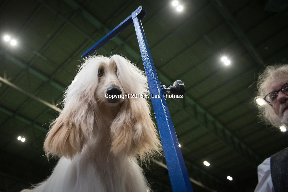 NEC, BIRMINGHAM, ENGLAND, UK. 9th MARCH 2018. Pictured:  A device with an uncanny resemblance to a gallows keeps an Afghan Hound in position as its owner completes the arduous task of grooming. / First held in 1891, Crufts is said to be the largest show of its kind in the world, the annual four-day event, features thousands of dogs, with competitors travelling from countries across the globe to take part and vie for the coveted title of 'Best in Show'.  // Lee Thomas, Tel. 07784142973. Email: leepthomas@gmail.com  www.leept.co.uk (0000635435)