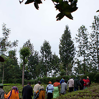 As Cathy tours one of the many local tea farms near Othaya, Kenya, a large gathering of tea farm workers and others also participate in the visit.