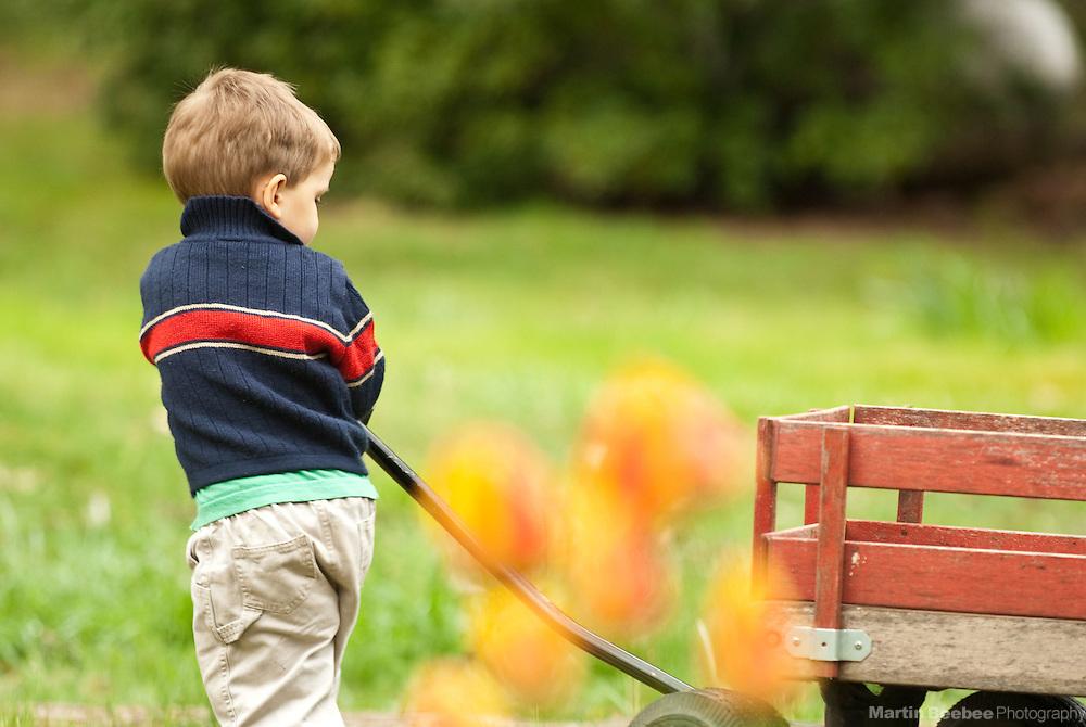 A two-year-old boy pulls a wagon