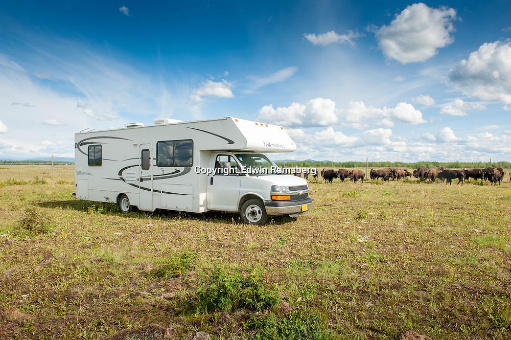 RV (recreational vehicle) parked near a herd of bison (bison bison)