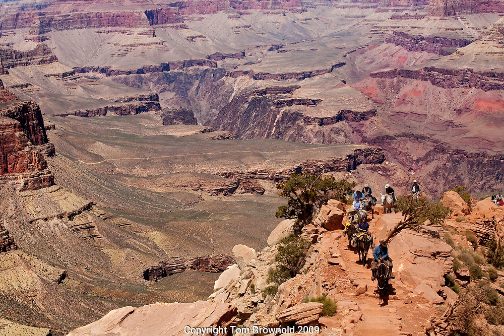 "Guided trail riders ascending the South Kaibab trail's ""windy ridge""."