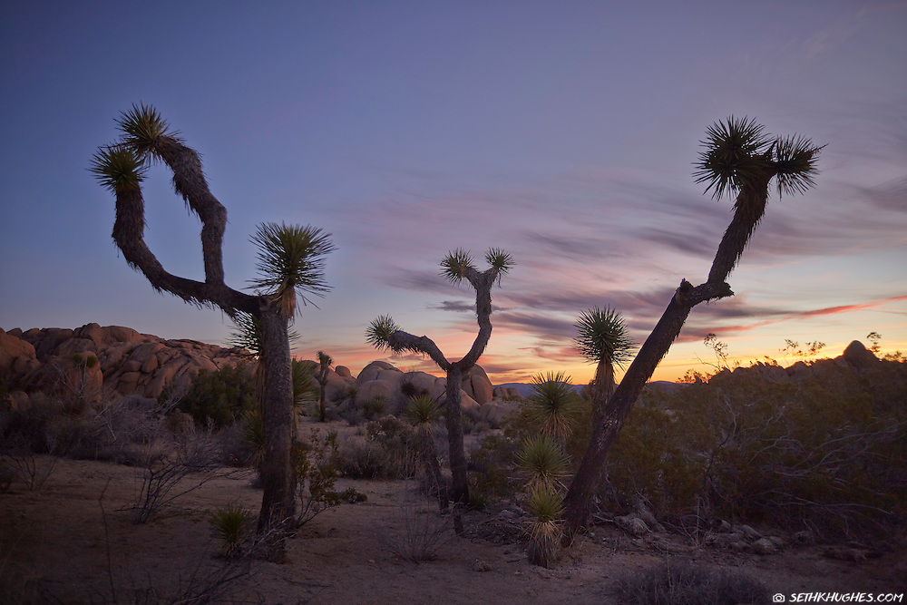 The sun begins to rise on the horizon at Joshua Tree National Park.
