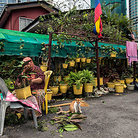 Hazizah Haji Abdul Majid, 70, takes care on her roadside nursery in front of her house in Kampung Baru, Kuala Lumpur, Malaysia, 18 April 2017. Along with two of her siblings, she had lived there since the 50's on the land that was bought by her late father for RM80 (16.77 euros). Hazizah hope to continue to live in the ancestral home of his father until the end of life.