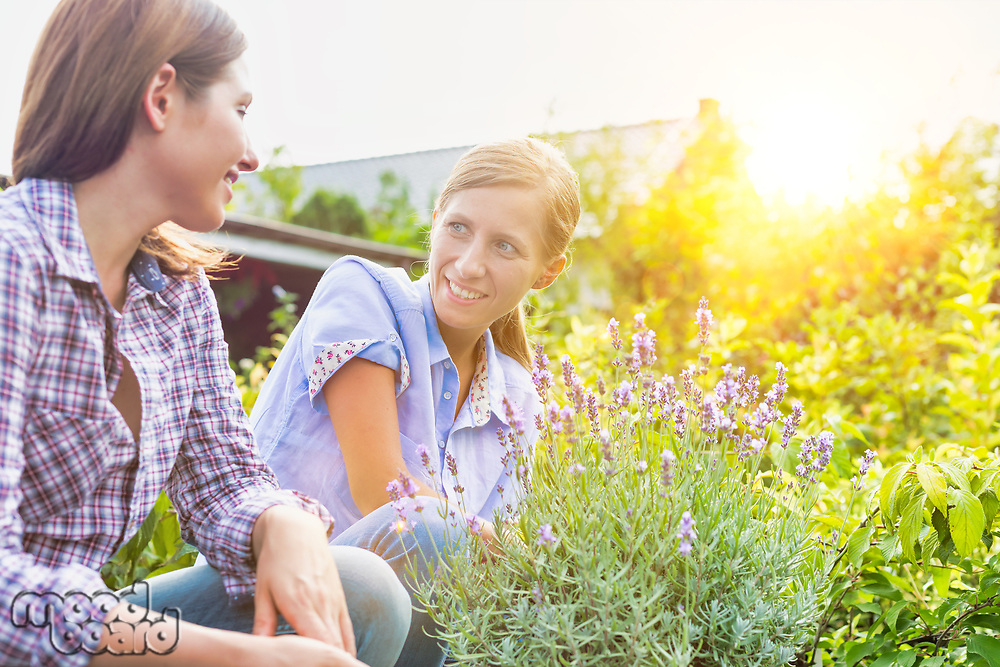 Portrait of shop owner showing flowers on pot to woman buyer with lens flare in background